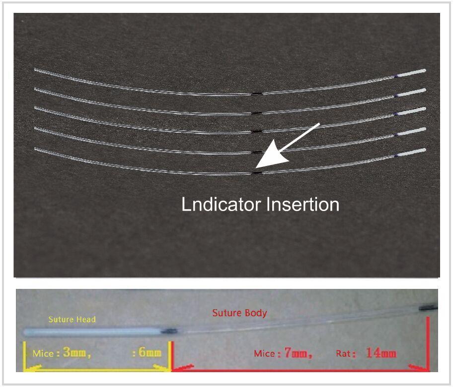 Monofilaments intraluminaux pour lésions ischémiques cérébrales MCAO